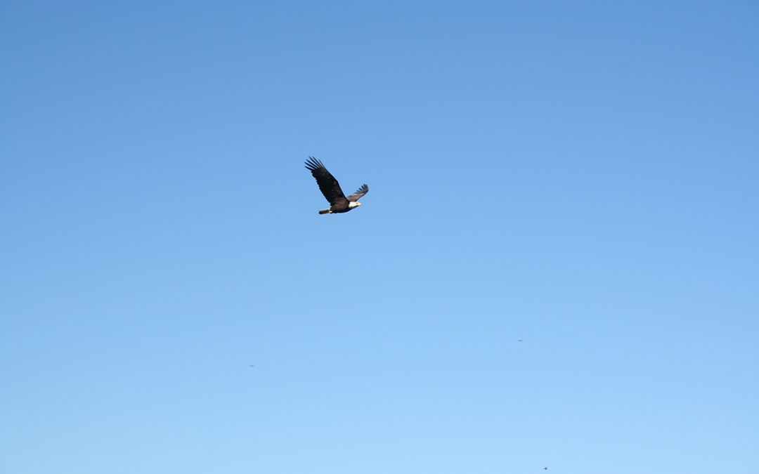 An Eagle Can Soar, and So Can You